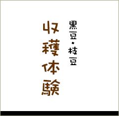 黒豆・枝豆 収穫体験